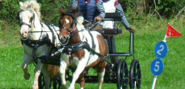 Charlcotte Farm Driving Trials Event Sun 18th Sept 2016