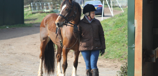 Long Reining – Stourport Riding Centre 3.4.16.